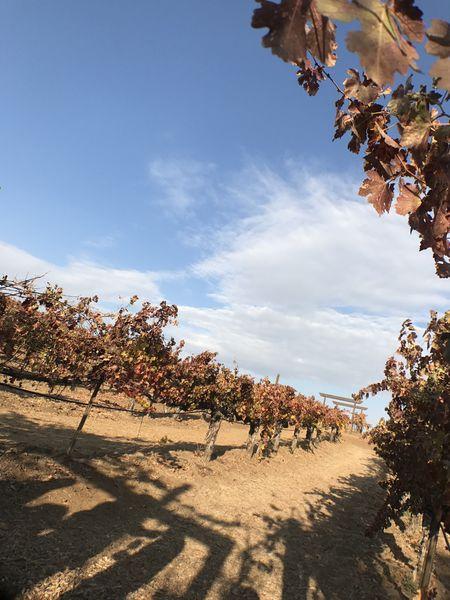 【美國 Temecula酒莊之旅】Thornton Winery、Wilson Creek Winery、Mount Palomar Winery @貝大小姐與瑞餚姐の囂脂私蜜話